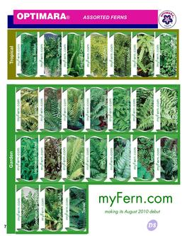 FERNS, Assorted Varieties