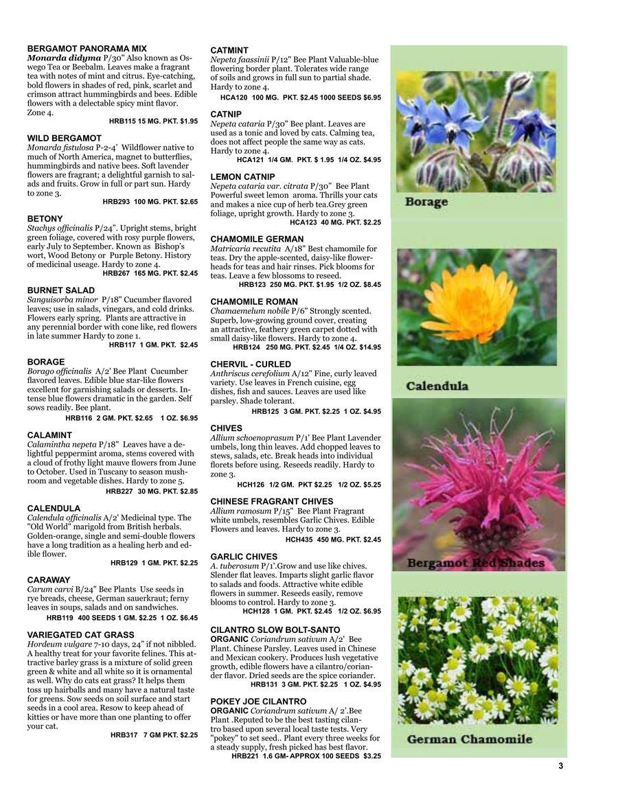 Wildflower Seeds Great Burnet 400 Seeds