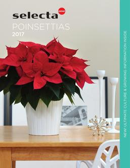 2016 Selecta Poinsettias